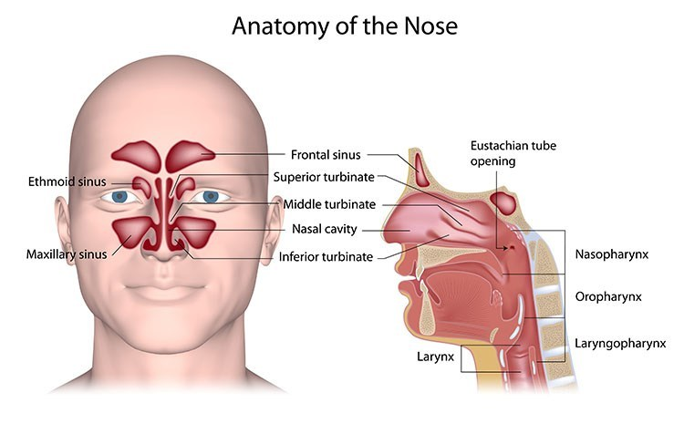 Sinusitis Pressure Relief In Jacksonville , FL - Jacksonville  Acupuncture Clinic